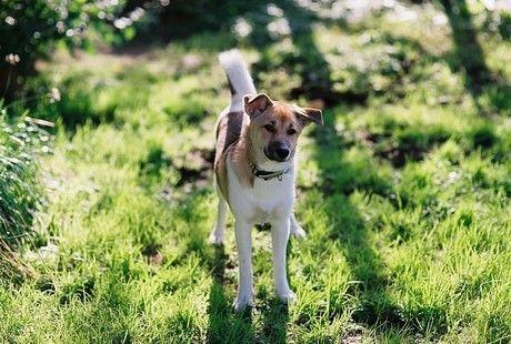 自然の中でしっぽをふる犬