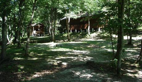 オートキャンプあびれの林間サイト