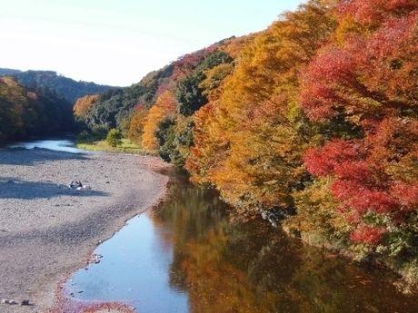 紅葉した嵐山渓谷の木々