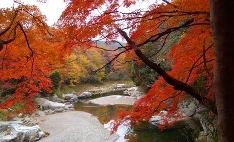 紅葉した嵐山渓谷バーベキュー場の景色