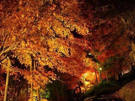 最上川公園の紅葉したもみじ山