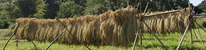 境自然ふれあいの森で作物を干している様子
