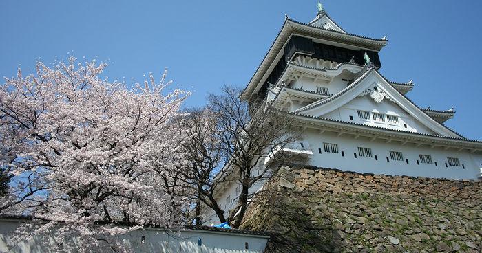 きれいな桜と小倉城