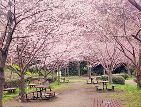 金沢自然公園のバーベキュー広場
