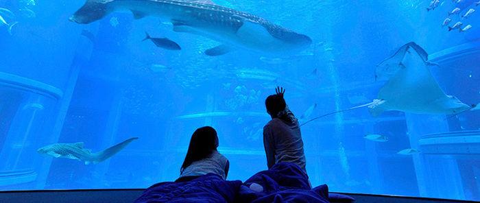 水族館で魚を見ている男女
