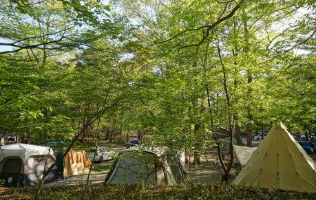 キャンプラビットのキャンプサイト