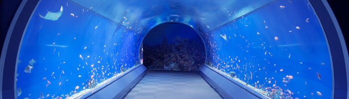 海遊館の水槽トンネル