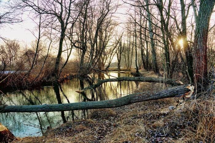冬の寒々とした川と林の風景