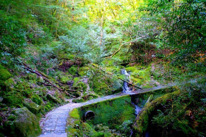 屋久島の森の風景