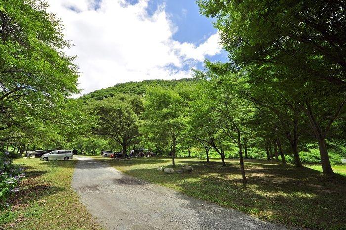 新平ヶ原高原キャンプ場のフリーサイト