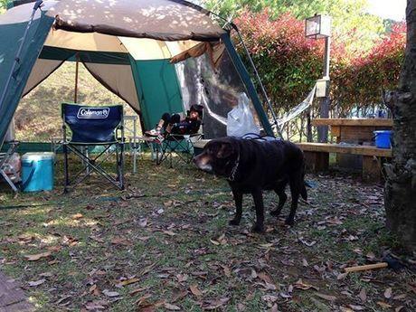 ととろの森 うめキャンプ村 ペットOKのサイト