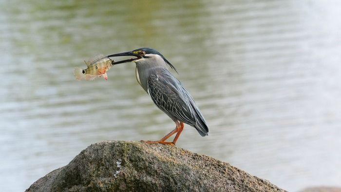えさを捕まえた野鳥