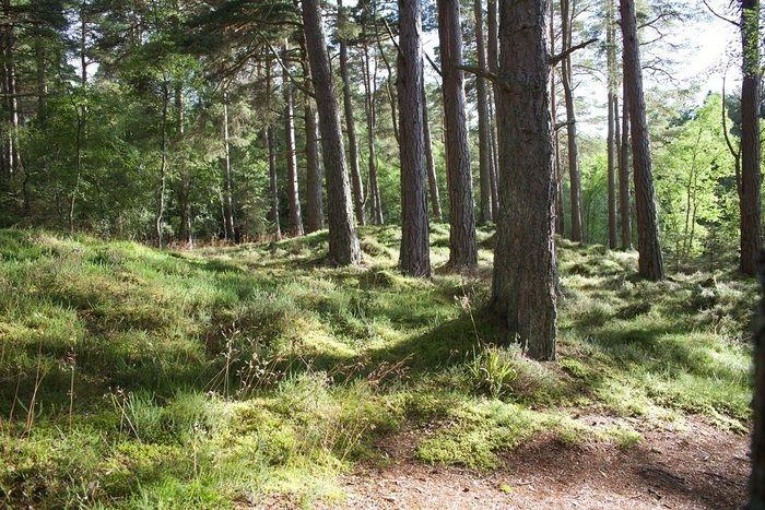 林間のフリーサイト