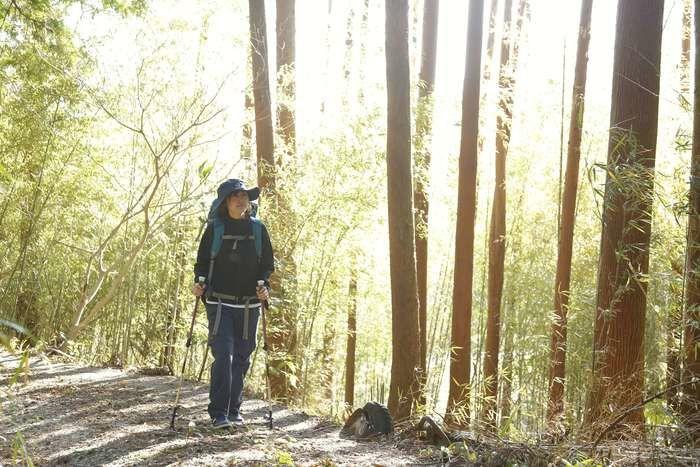 木漏れ日の中を登山する女性