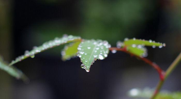 雨上がりの葉の様子