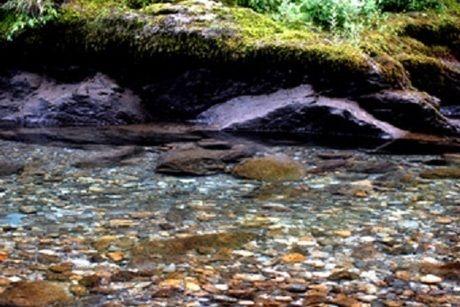 透明度の高い川の写真
