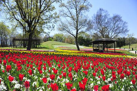 まんのう公園キャンプ場の花畑