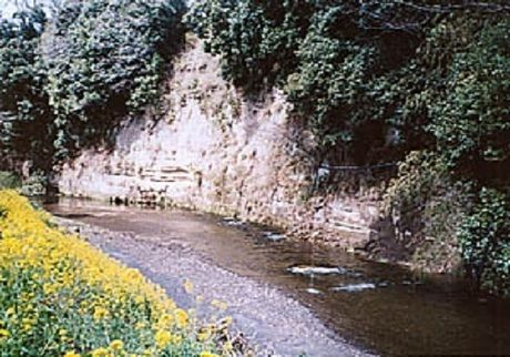 柿山田オートキャンプガーデンの川
