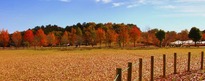 紅葉の観音山ファミリーパーク