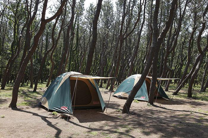茅ヶ崎市柳島キャンプ場の林間サイト
