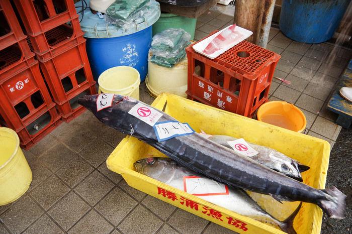 勝浦漁港の海産物