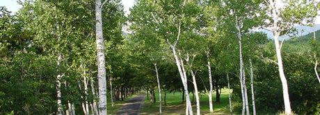 太平山リゾート公園の林