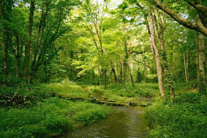 白老ふるさと2000年の森 ポロトの森キャンプ場