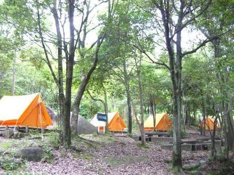 金立教育キャンプ場のテントサイト
