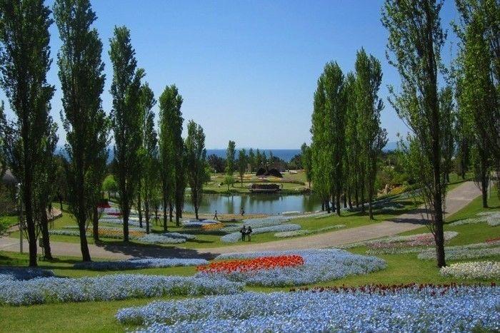 淡路島国営明石海峡公園の花畑