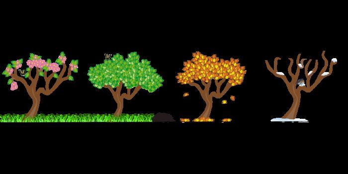 四季の木を表した絵