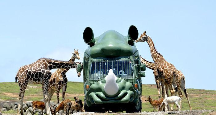 アフリカンサファリの動物たち