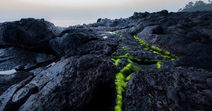 波戸岬キャンプ場の岩場と苔