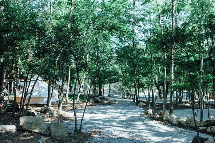 杜のテラスの林道