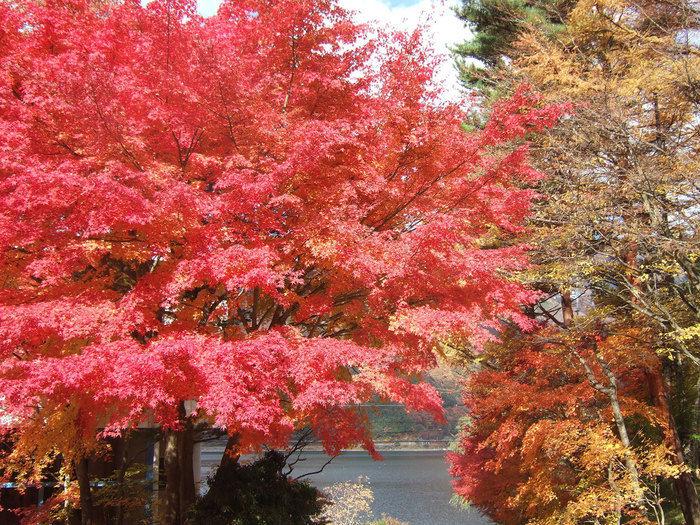 紅葉台キャンプ場の紅葉