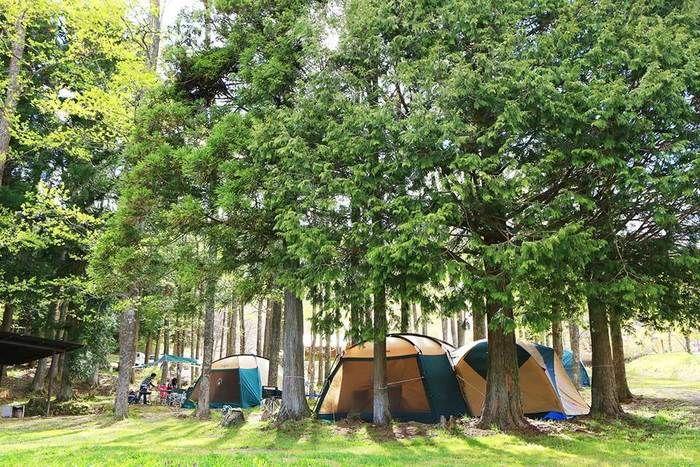 駒ヶ根高原家族旅行村アルプスの丘でテントが貼ってある写真