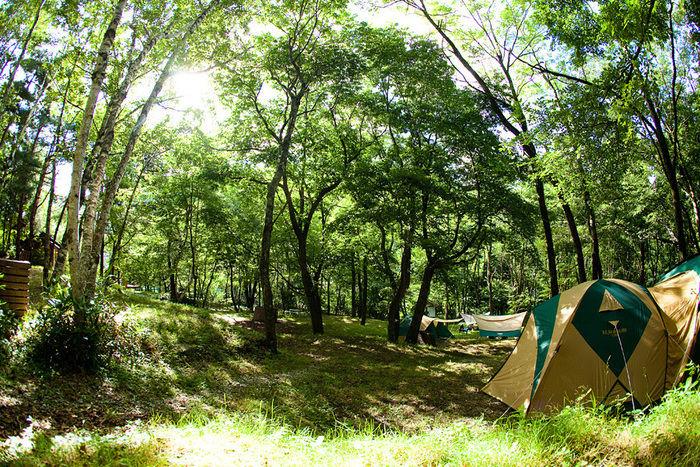 ミヤシタヒルズオートキャンプ場でテントが貼ってある写真