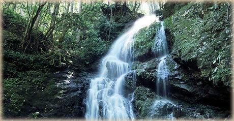 西行庵の滝