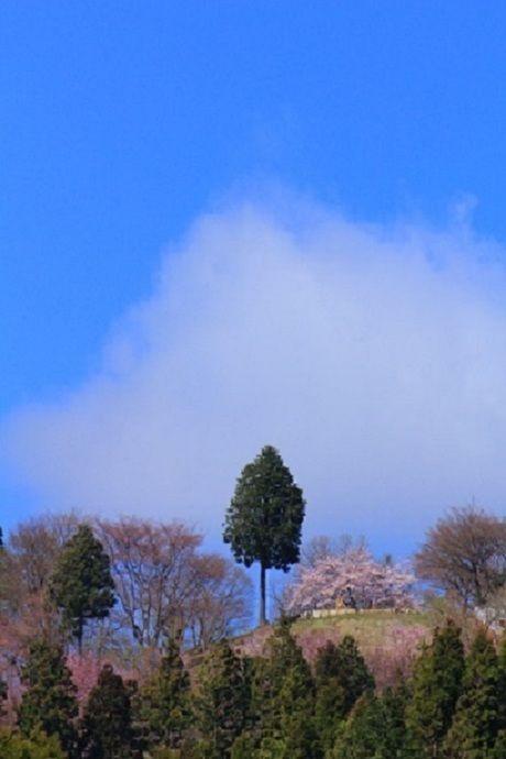 高尾山の山頂に生える木