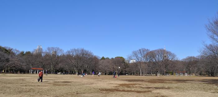 冬の代々木公園の広場