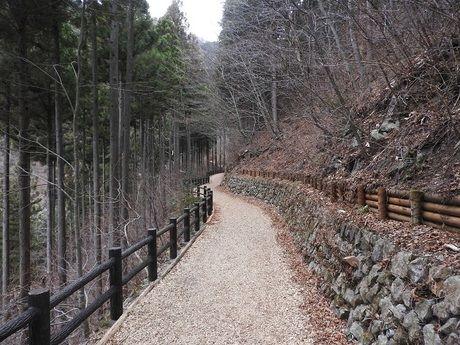 都民の森のウッドチップの敷かれた路