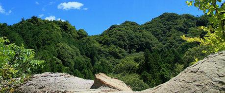 清和県民の森の自然