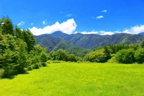 緑の芝生と山々