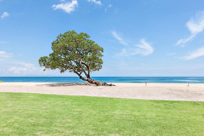ビーチに生える木