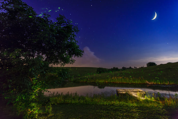 三日月と蛍の光が幻想的な風景