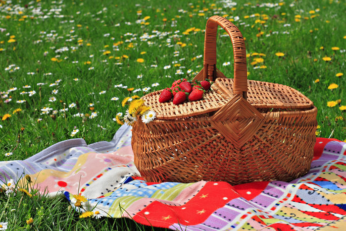 芝生広場に置いてあるピクニック道具の写真