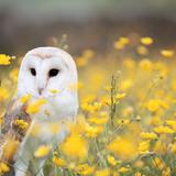 owlmeister