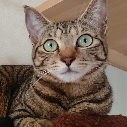 miyabi_saito