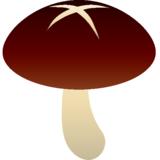 Chrysanthemum94