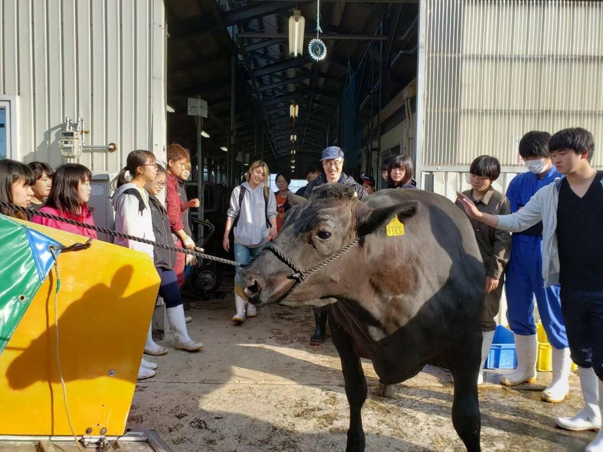 肉牛研究会