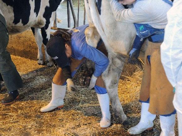 学内開催初の2級認定牛削蹄師認定資格試験に学生17名がチャレンジ!